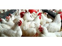 Poultry Farm Worker Required