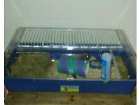 Male guinea pig with large cage indoor cage