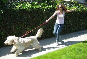 Walking Clinic for Dogs