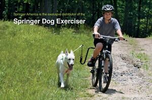 Safely exercise your dog with your bike