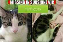 CAT MISSING - SUNSHINE Sunshine Brimbank Area Preview