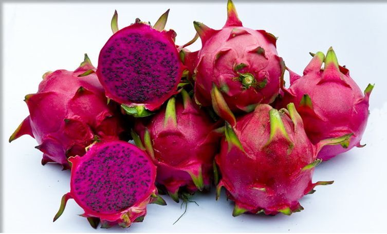 Dragon Fruit Pitaya Red Flesh Variety R60