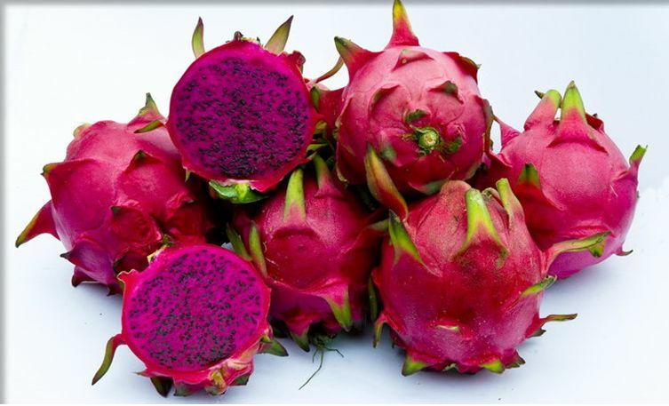 3 x Plants Dragon Fruit Pitaya Red Flesh Variety in Sunnyside & Arcadia image 1