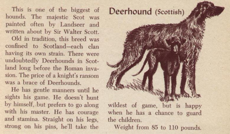 Scottish Deerhound - Vintage Dog Art Print - 1954 M. Dennis