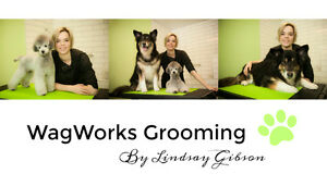 Dog & Cat Grooming by Lindsay