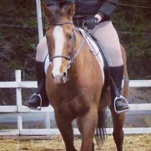 *Price reduced* 2007 Registered Thoroughbred Gelding
