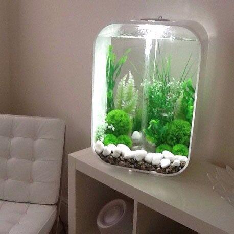 Biorb 60l aquarium with heater and other accessories in for Petit aquarium