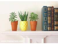 Wanted: Small, indoor pot plants
