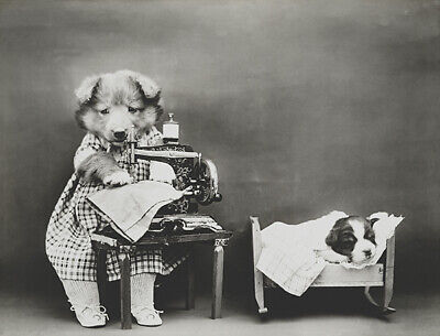Making Baby's Clothes - Dog Puppy Sewing Machine - 1914 - Photo Poster ()