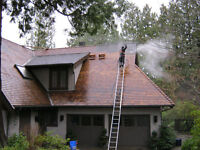 Pressure Washing, Roof Cleaning, Gutter Cleaning