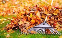 Nettoyage automne (feuilles)