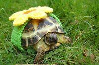 ❤️Russian baby tortoise(turtles).❤️