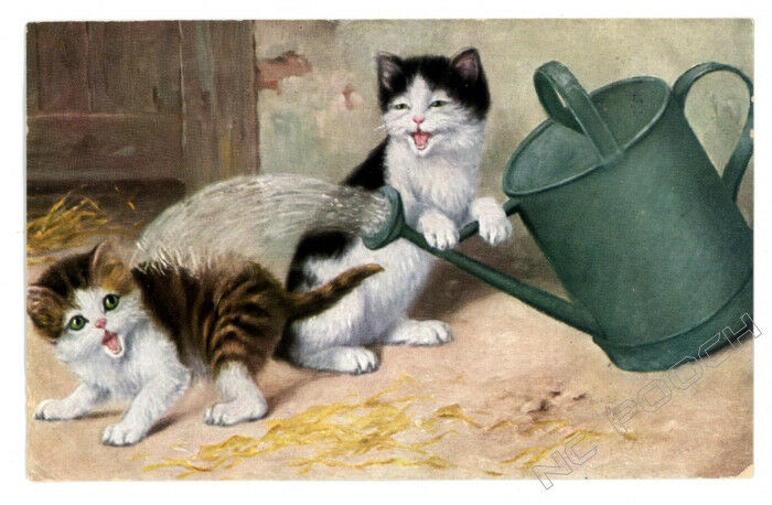 vintage cat postcard cute cats play w watering can