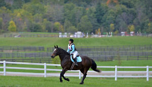Quiet and fun horse for part-board or part-lease !