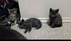 Kittens looking for forever homes