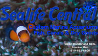 Sealife Central, Custom Saltwater Aquariums, Fish, Coral & more!