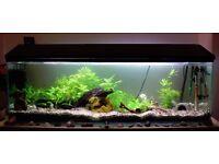 4ft (120L) mature freshwater tropical aquarium and fish