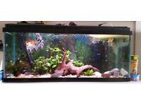 Aquarium - Fish tank -tropical fish -complete set up for sale