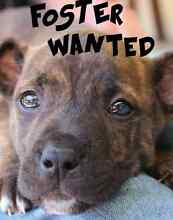 FOSTER CARERS WANTED FOR DOGS/PUPPIES Animal Rescue West Perth Perth City Preview