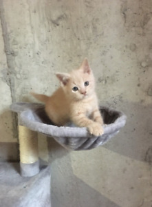 Kitten looking for new home