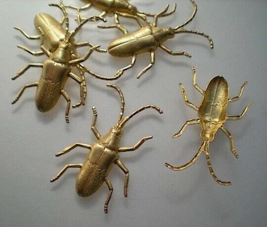 6 medium longhorn beetle stampings