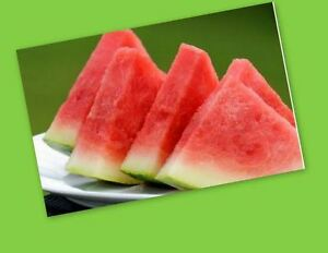 FLAVOR OIL for LIP BALM 1/2 oz *** WATERMELON FLAVOR OIL