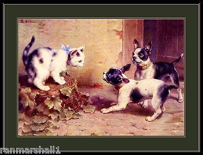 English Print Boston Terrier Dog Cat Kitten Picture Art Cat Dog Art