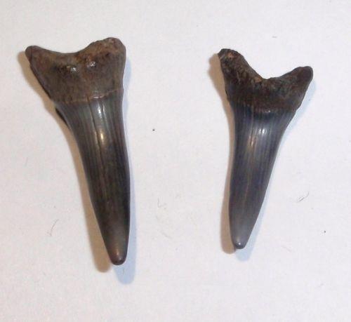 Goblin Shark Toys : Goblin shark ebay