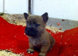 One male puppy left ready to go home Feb 25