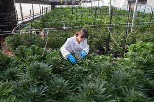 LOCALS FOR RENT FOR MEDICAL CANNABIS CULTIVATION IN CHATEAUGUAY