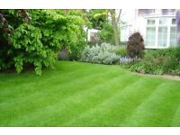 Cheap and Cheerful Grass cutting Service in Newcastle