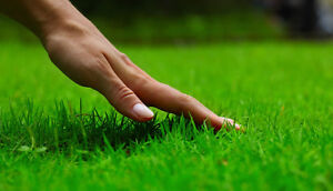 Lawn care Airdrie