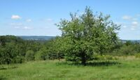 Lot With Great View.....Minutes From Sussex