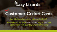 Lazy Lizards - Home of the Orginal Cricket Card
