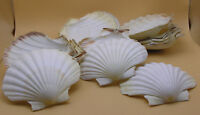 16 Scallop / Clam Shells for baking / serving Oshawa / Durham Region Toronto (GTA) Preview
