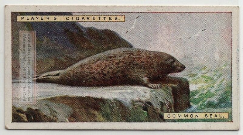 Common Seal 1924 Trade Ad Card