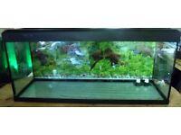 aquarium 4ft fish tank