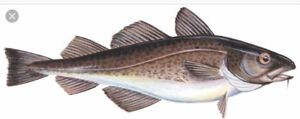 Wanted to buy a groundfish license