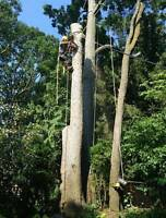 Harmony Tree Service for your trees ☎6475219123