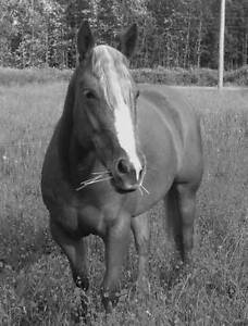 Wanted horse