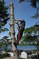 Tree Cutting and Removal $ TREERIFIC PRICES! $Save 780-288-0467