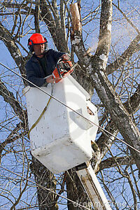 ECONOMICAL TREE REMOVAL-PRUNING-TRIMMING $$REASONABLE RATES$$