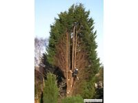 Tree surgeons our services: Include Gardening work, Artificial grass, fencing