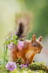 Finicky*Squirrel