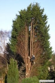Tree surgeons, Fencing, Arificial turf and all gardening works call today for a free Quote