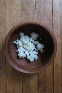 Healthy Dairy Kefir Grains