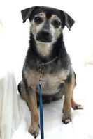 Tommy- An angel of a dog!  Loves cats, dogs, everyone : )