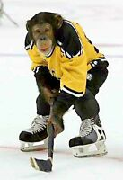 Skilled Hockey player wanted