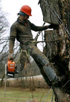 BGM Total Tree Care - Affordable, Insured Tree Service
