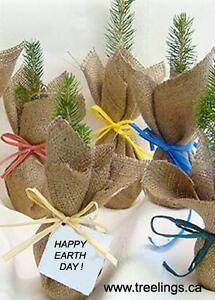 Tree Seedlings for Weddings, Earth Day, Birthdays, Promotions Downtown-West End Greater Vancouver Area image 2